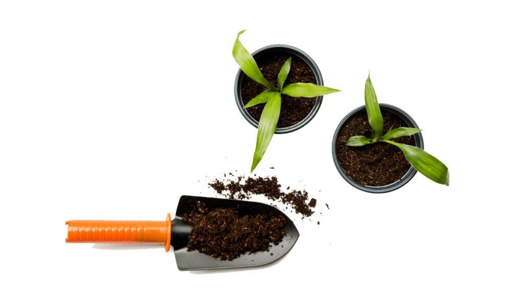 Fertilização das Flores de Jardins