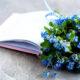 Músicas e Poemas sobre flores