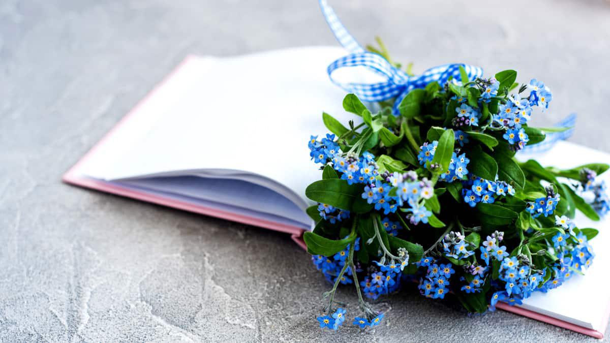 Letras de Músicas e Poemas Românticos sobre flores