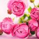 Flores e seus Significados