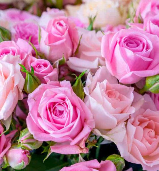 Cores de Rosas e Significados