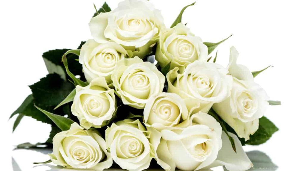 Significado Rosas Brancas