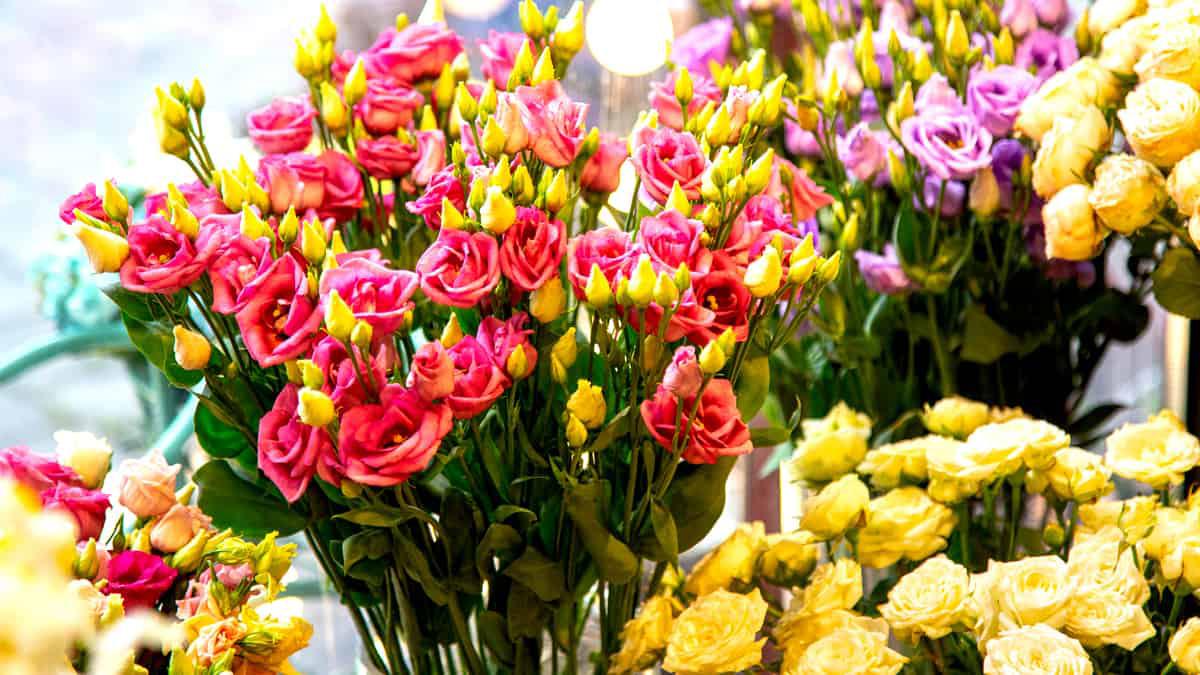 Flores para oferecer