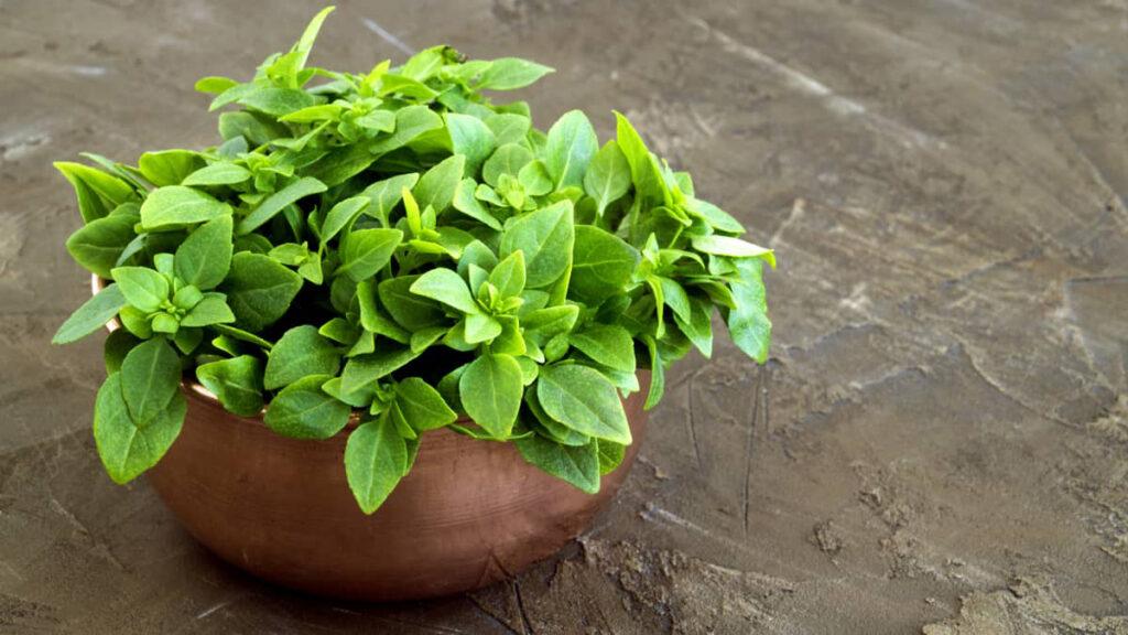 Plantas aromáticas para oferecer