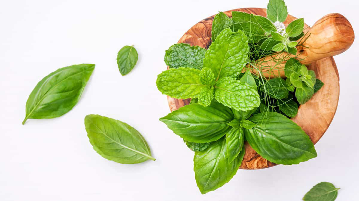 Plantas medicinais que não podem faltar em casa