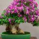 Bonsai Arte Oriental de Cultivo