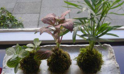 Kokedama - Arte de Cultivo Oriental