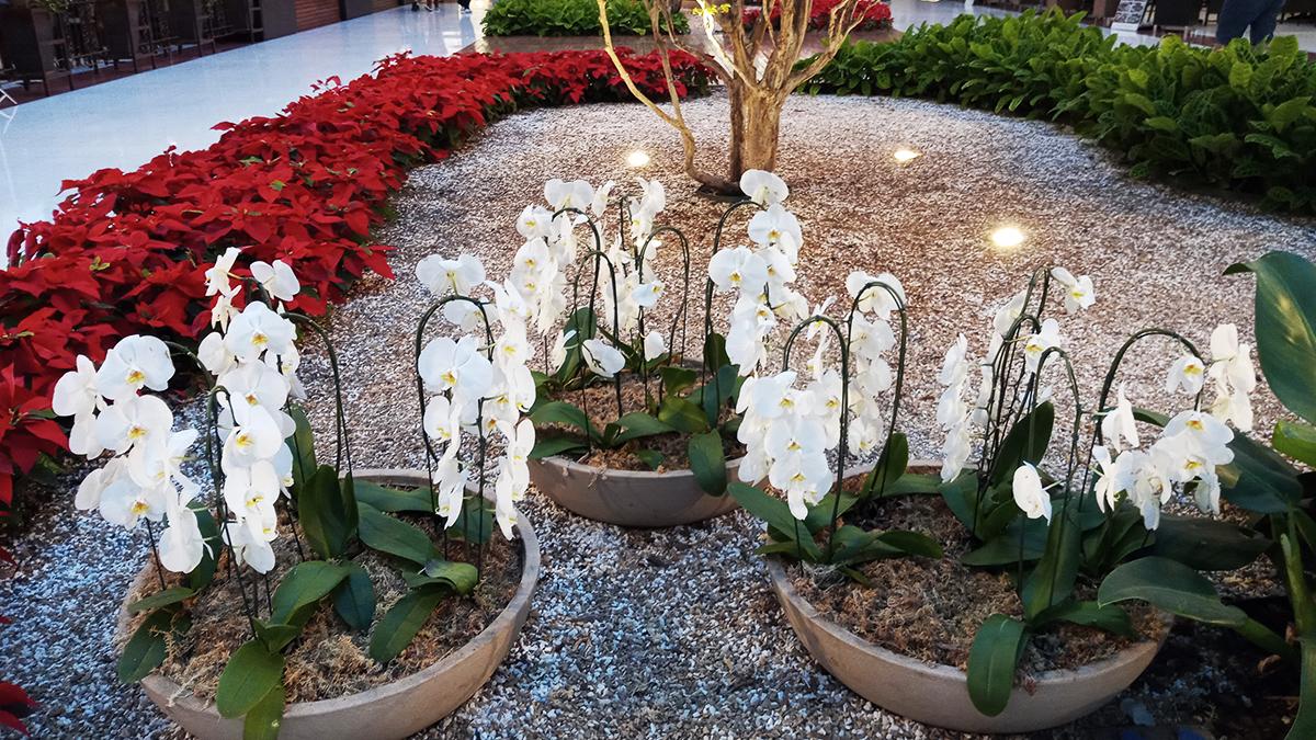 Espécies de Orquídeas e suas necessidades de cuidados