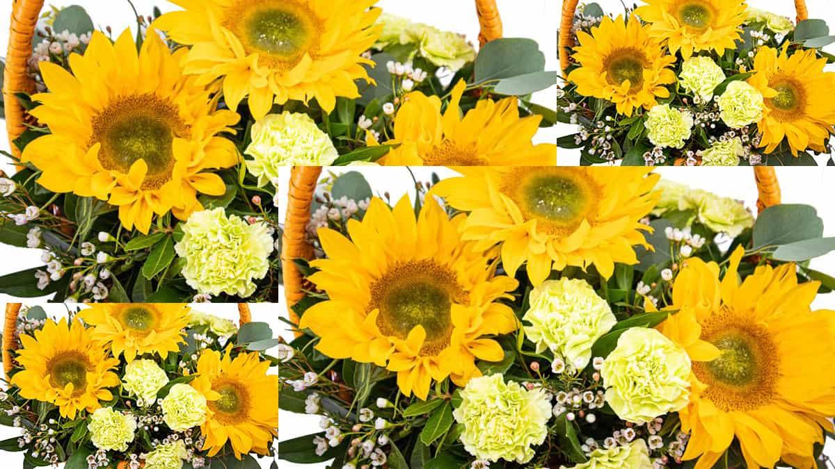Girassol - A escolha perfeita para o bouquet de noiva