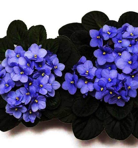 Flores para casamento homoafetivo e que simbolizam o movimento LGBTQ +
