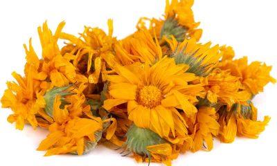 Conheça as Flores para Decoração de Halloween
